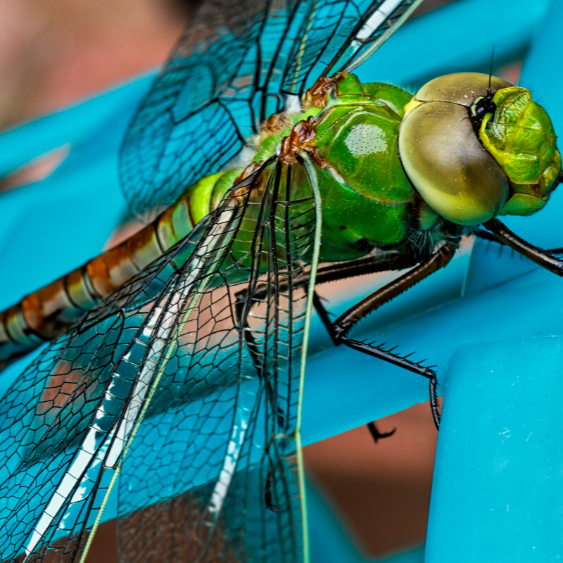 dragonfly on a fence