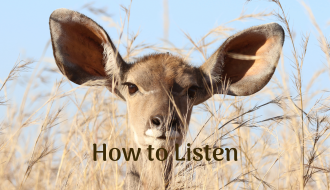 antelope listening with huge ears